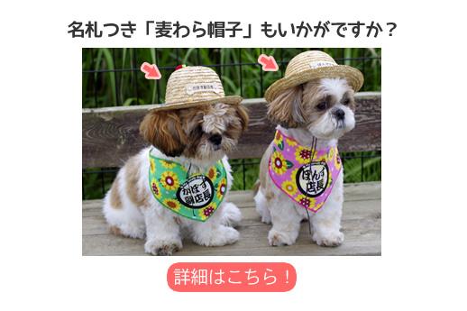 ご一緒に犬用麦わら帽子いかがですか