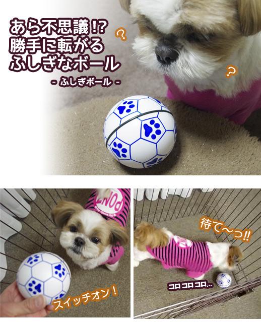 勝手に動く不思議な犬用おもちゃ