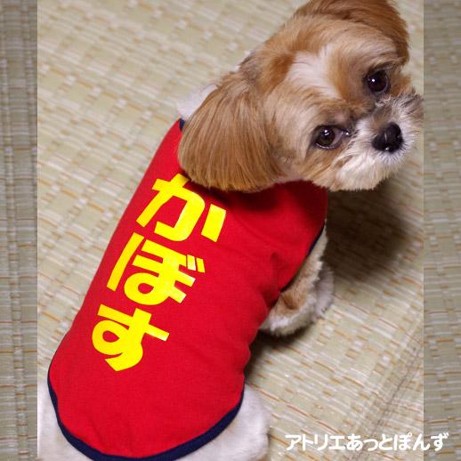 犬の名前入り服