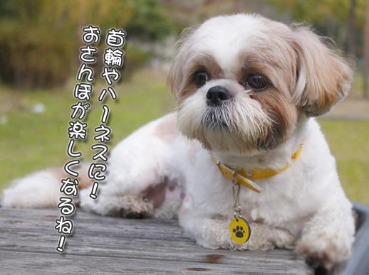 犬・猫・ペット用の迷子札(ネームプレート)